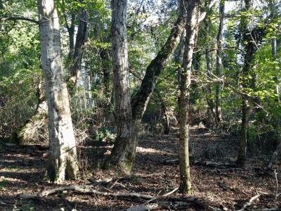 Ormanda Hazine Avı…